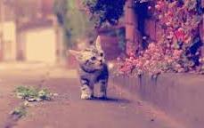 kitten exploring